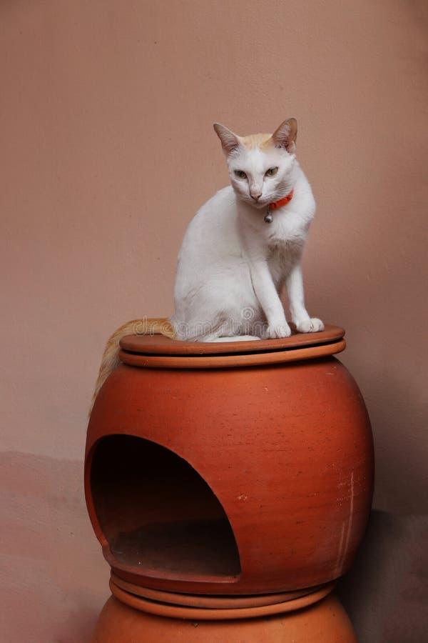 Biały kota obsiadanie na kota domu robić od earthenware obrazy royalty free