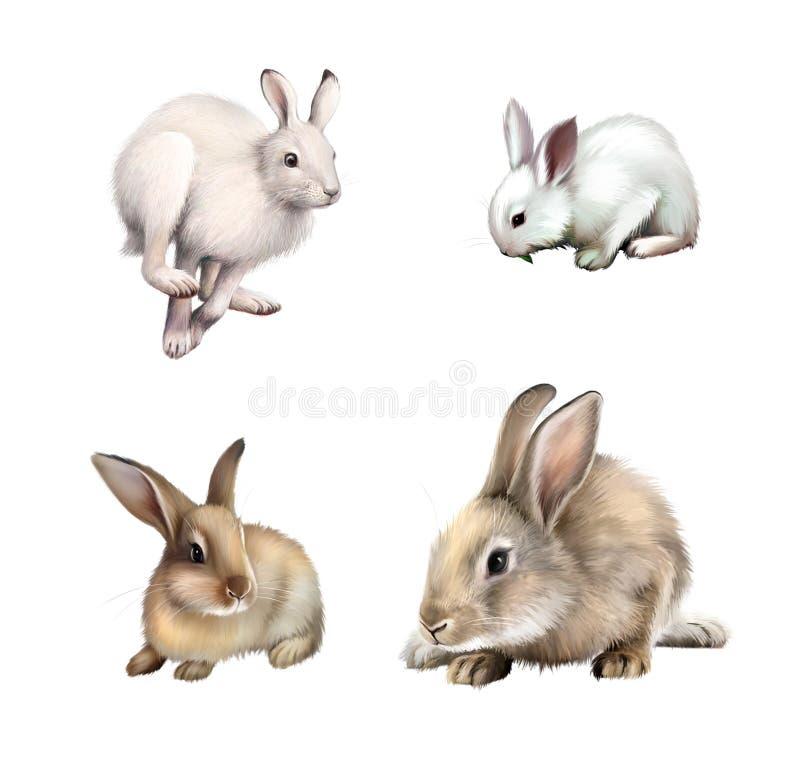Biały królika obsiadanie, Biały zajęczy działający daleko od. Szary królik. Odizolowywający na białym tle. ilustracji