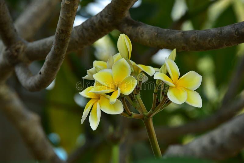 Biały kwiat lub żółty kwiat obraz stock