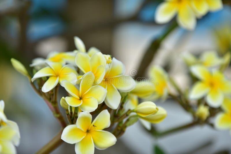 Biały kwiat lub żółty kwiat fotografia stock