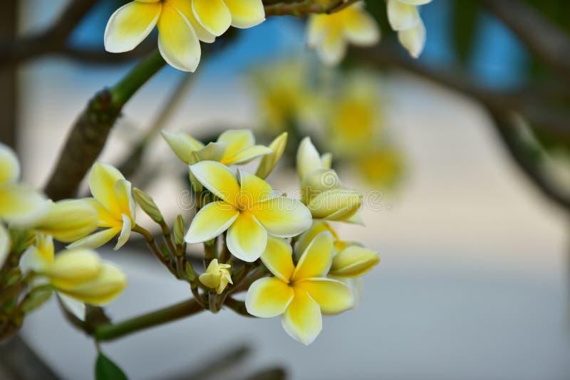 Biały kwiat lub żółty kwiat obrazy royalty free