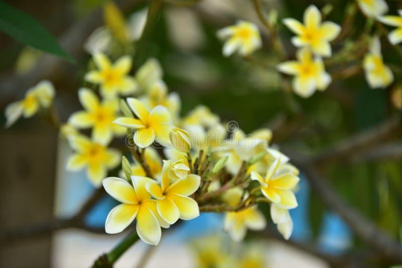 Biały kwiat lub żółty kwiat fotografia royalty free