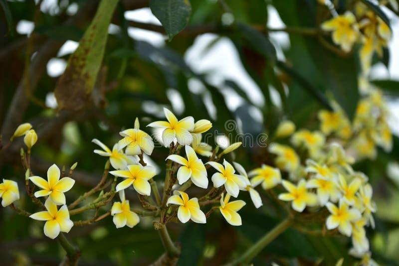 Biały kwiat lub żółty kwiat obraz royalty free