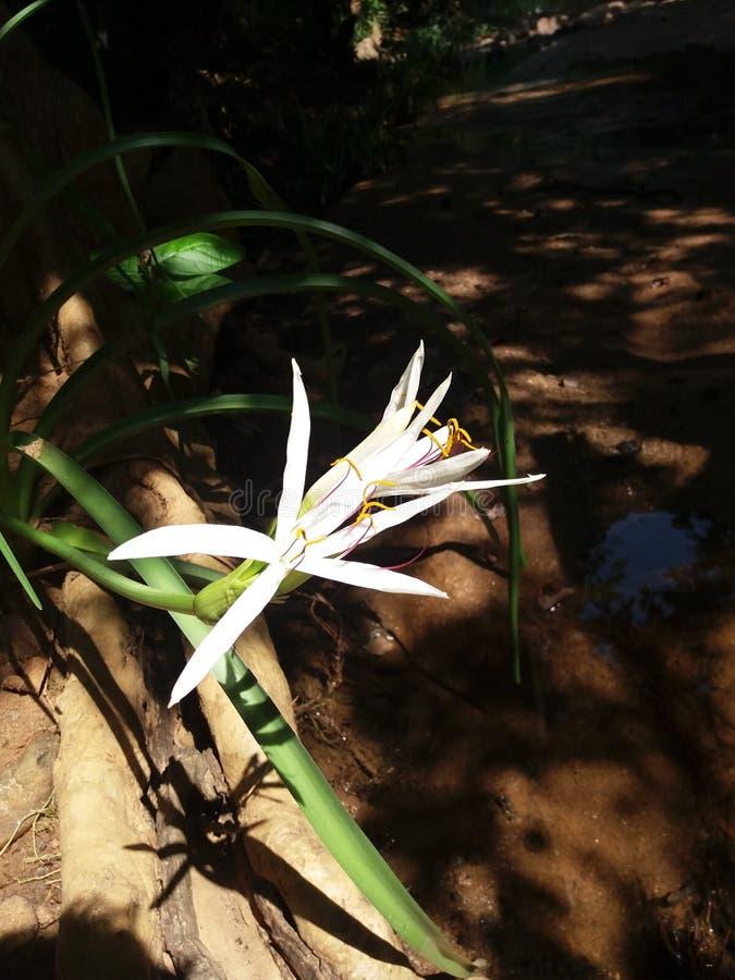 Biały kwiat w lesie zdjęcie royalty free