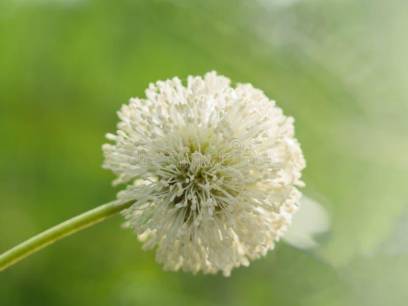 Biały kwiat w natury zieleni fotografia stock