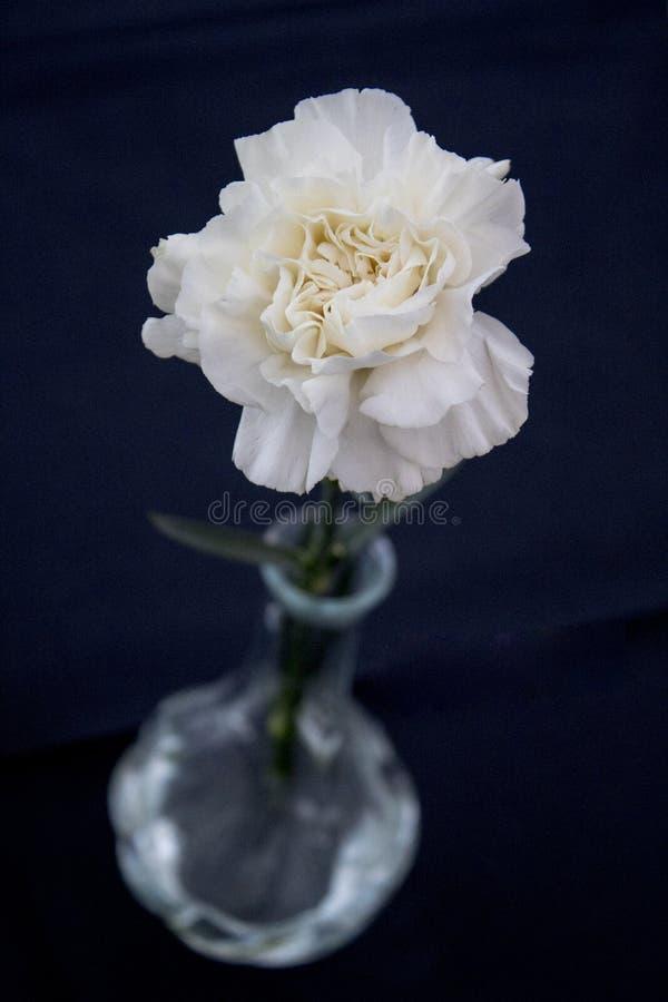Biały kwiat z zamazaną wazą obraz royalty free