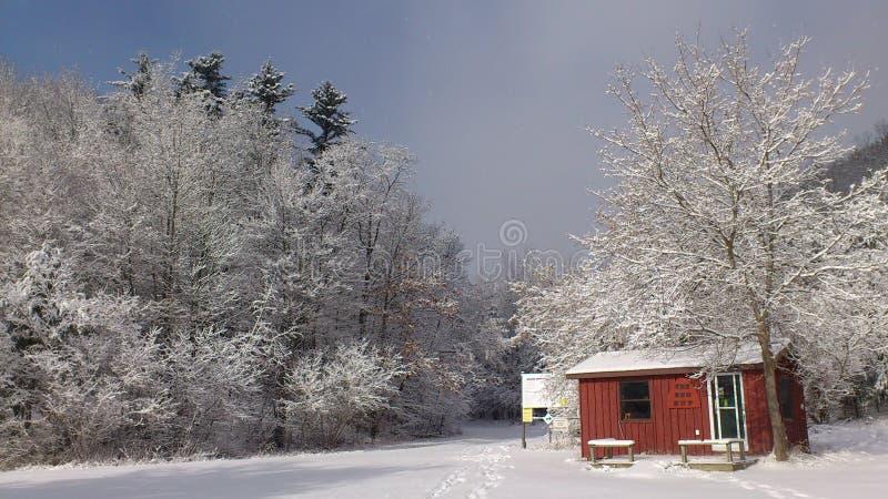 Biały las zdjęcia royalty free