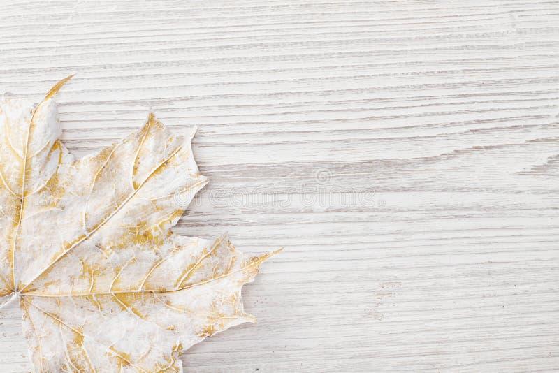 Biały liść klonowy, drewniany tło fotografia royalty free