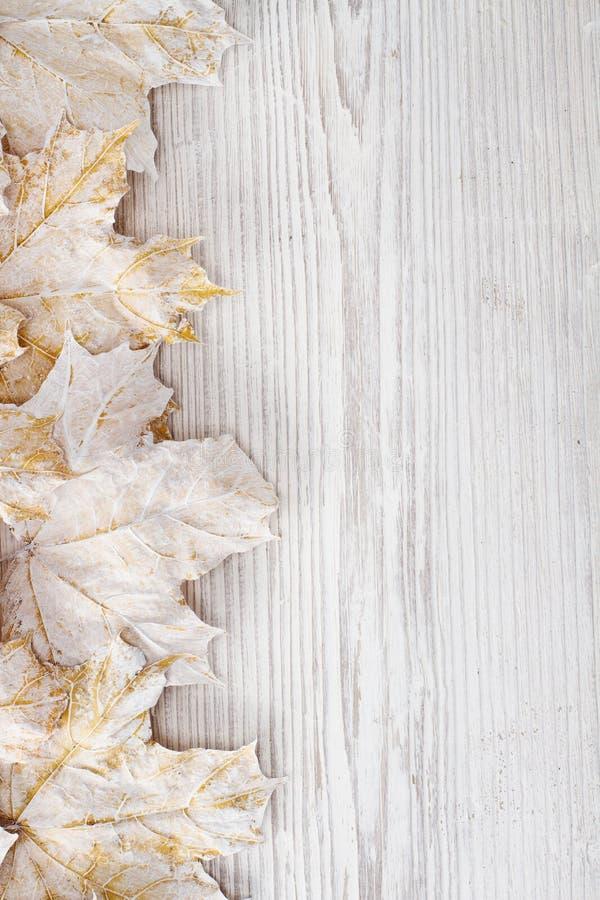 Biały liść klonowy, drewniany tło obrazy stock