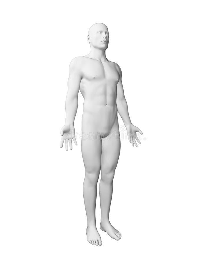 Biały męski ciało ilustracja wektor