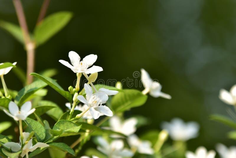 Biały mały drzewo i kwiat zdjęcie stock