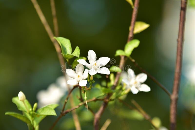 Biały mały drzewo i kwiat obrazy royalty free
