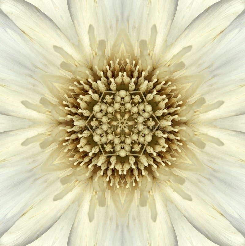 Biały mandala kwiatu centrum Koncentryczny kalejdoskop zdjęcie stock