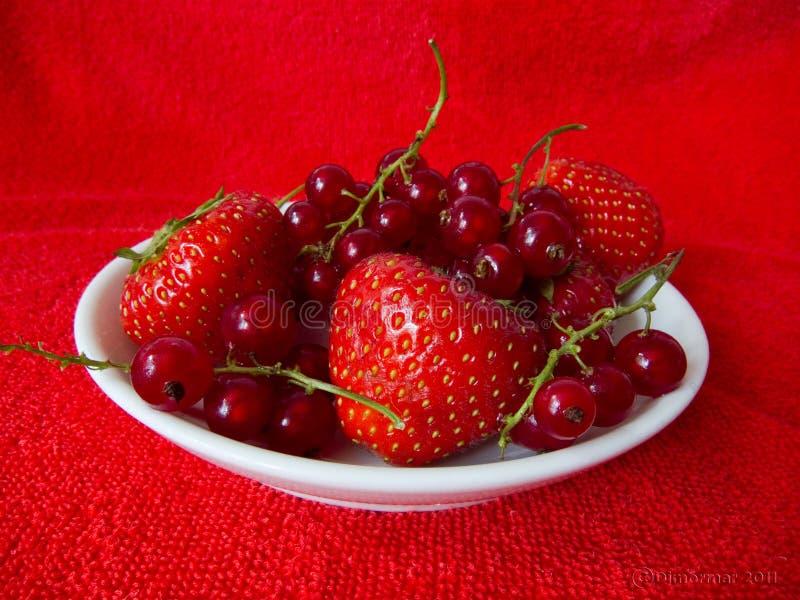 Biały naczynie truskawkowy i rasberry na czerwonym tle fotografia royalty free