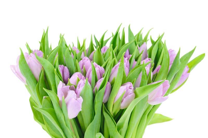 biały odosobneni tulipany fotografia stock