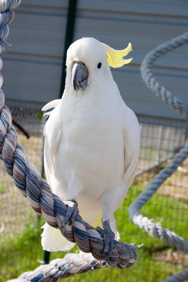 Biały opierzony ptak w lata słońcu fotografia royalty free