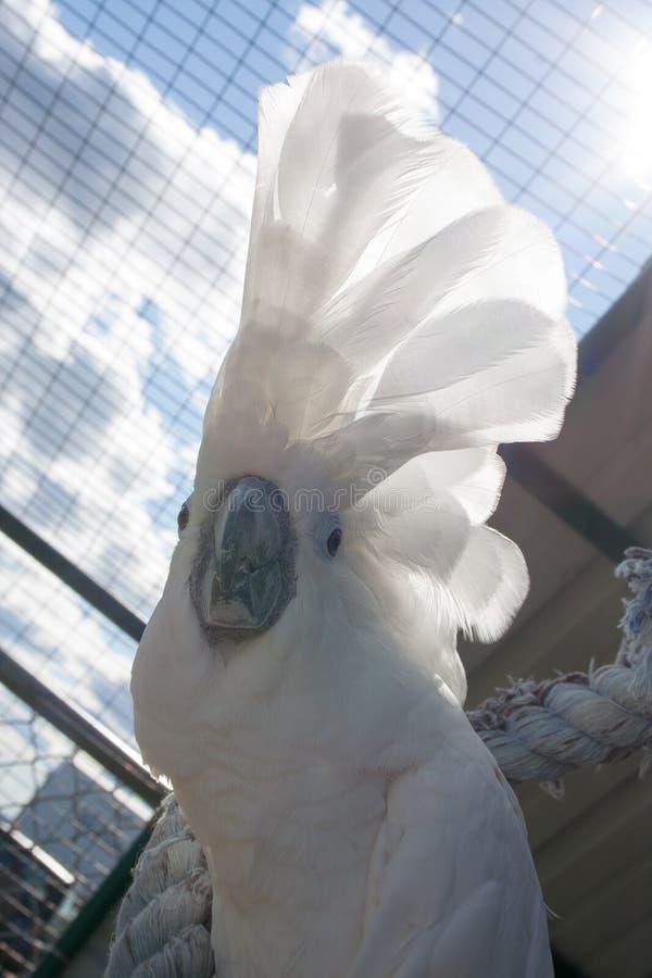 Biały opierzony ptak w lata słońcu zdjęcia stock