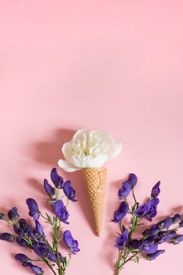 Biały peonia kwiat w gofra szyszkowym i ultrafioletowym aconitum na różowym tle pojęcia tła ramy piasek seashells lato obraz stock
