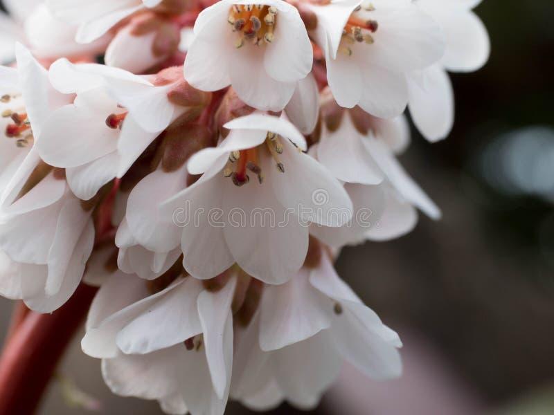 Biały piękny kwiat w ogródzie na niezwykłym tle fotografia stock