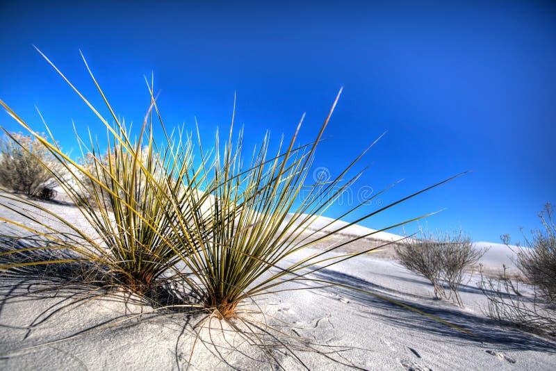 Biały piaska Krajowego zabytku pustyni przyrost obrazy royalty free