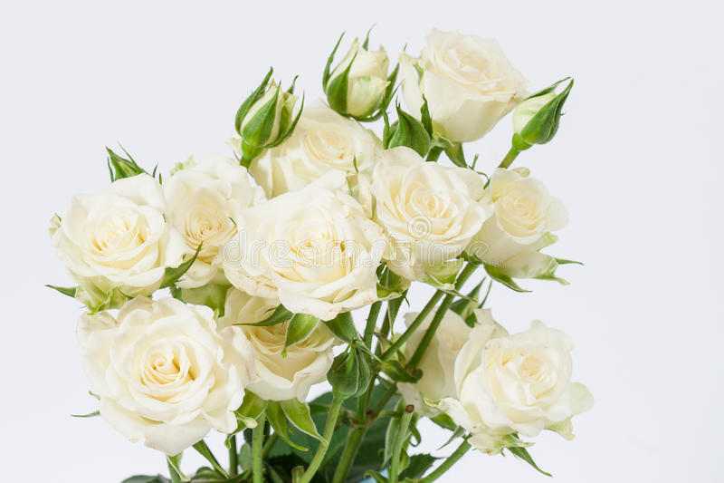 Biały róże obraz stock