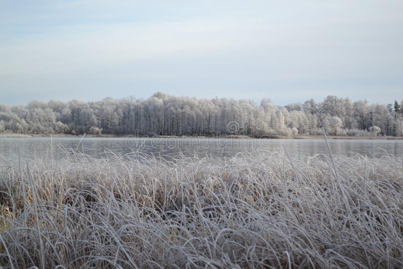 Biały słoneczny dzień zimy dzień i jezioro obraz royalty free