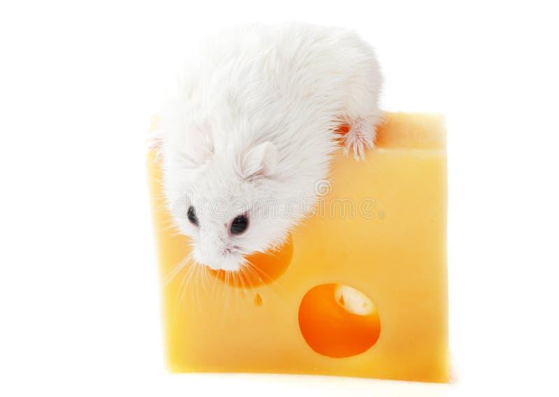 Biały ser i mysz zdjęcie stock