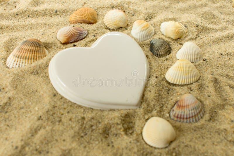 Biały serce i seashells kłama w piasku na plaży zdjęcia royalty free
