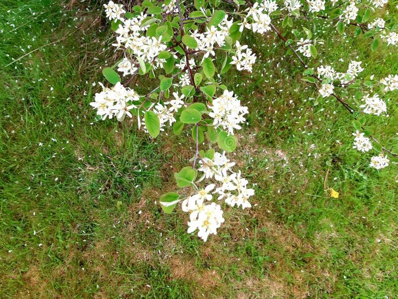 Biały spotyka zieleń zdjęcie royalty free