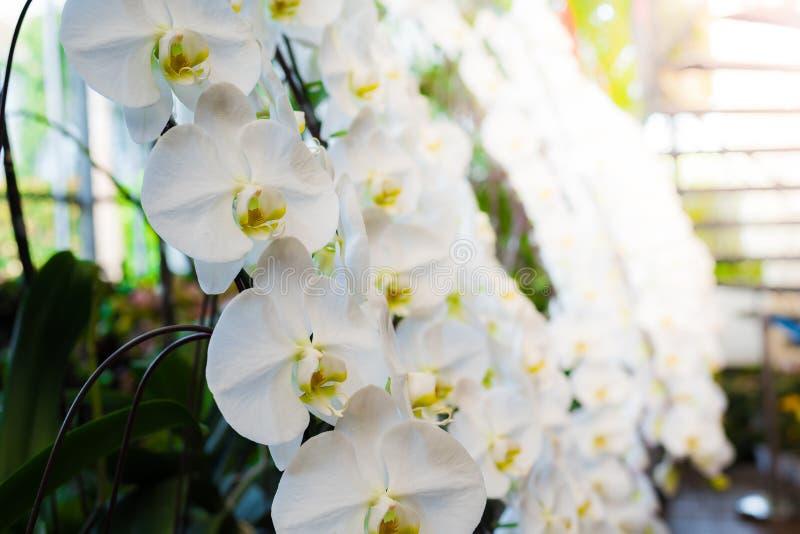 Biały storczykowy kwiat obrazy stock