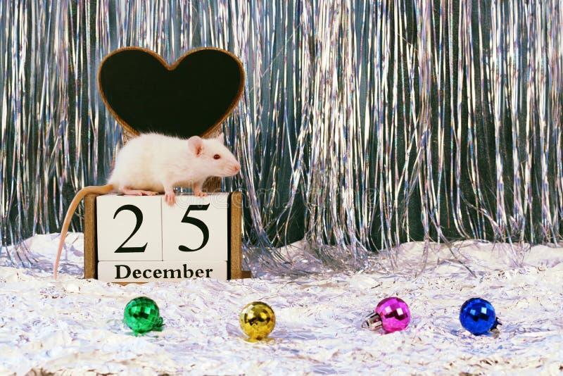 Biały szczura obsiadanie na drewnianym blokowym kalendarzu z boże narodzenie dekoracjami, symbol nowy rok 2020 zdjęcie royalty free