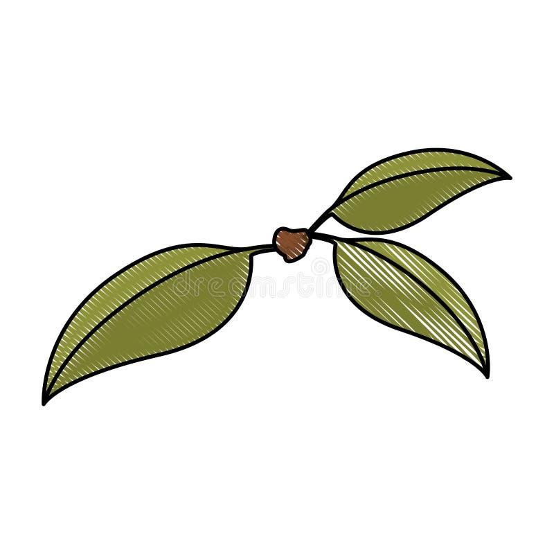Biały tło barwiona kredkowa sylwetka trzy zielonego liścia wiśnia z trzonem royalty ilustracja