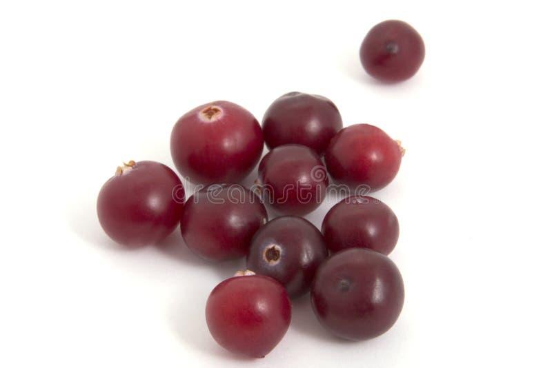 biały tło cranberries obraz stock