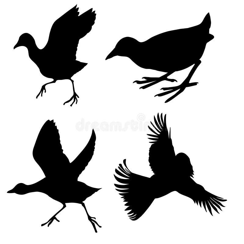biały tło ptaki ilustracja wektor