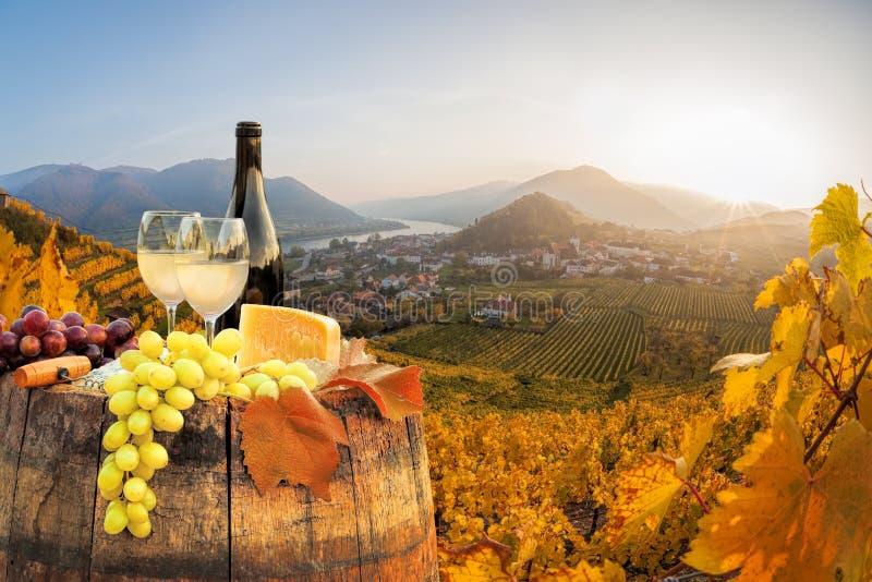 Biały wino z baryłką na sławnym winnicy w Wachau, Spitz, Austria zdjęcie royalty free