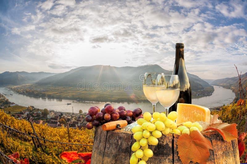 Biały wino z baryłką na winnicy w Wachau, Spitz, Austria zdjęcie royalty free