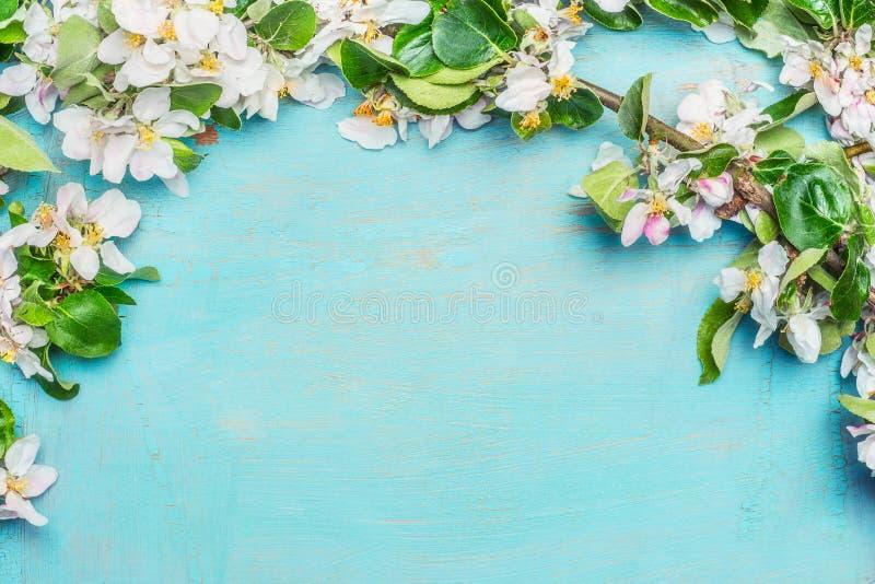 Biały wiosny okwitnięcie na błękitnym turkusowym drewnianym tle, odgórny widok, granica Wiosna zdjęcie stock
