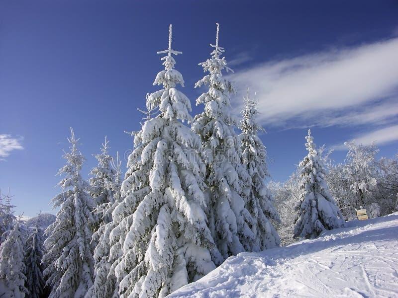 biały zima zdjęcie royalty free