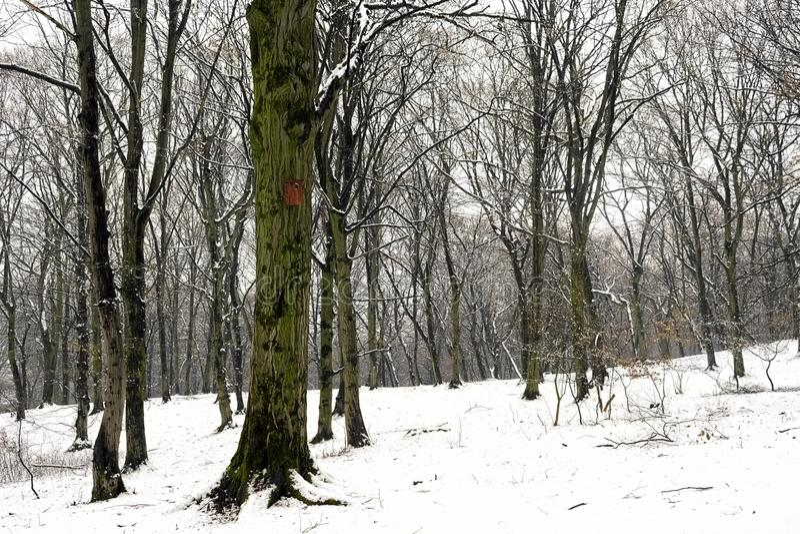 Biały zima las po opadu śniegu obraz stock