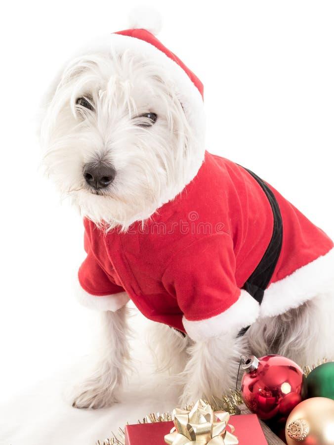 Białych Bożych Narodzeń Szczeniaka Pies zdjęcie royalty free