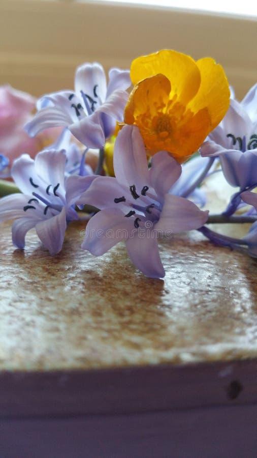 Białych kwiatów miłości uwiedzenie i tajemnica obraz royalty free
