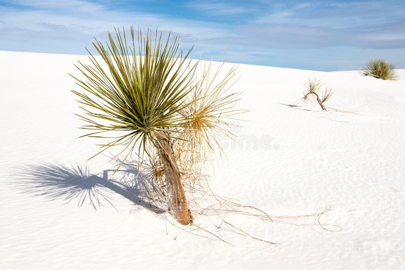 Białych piasków Krajowy zabytek obrazy royalty free