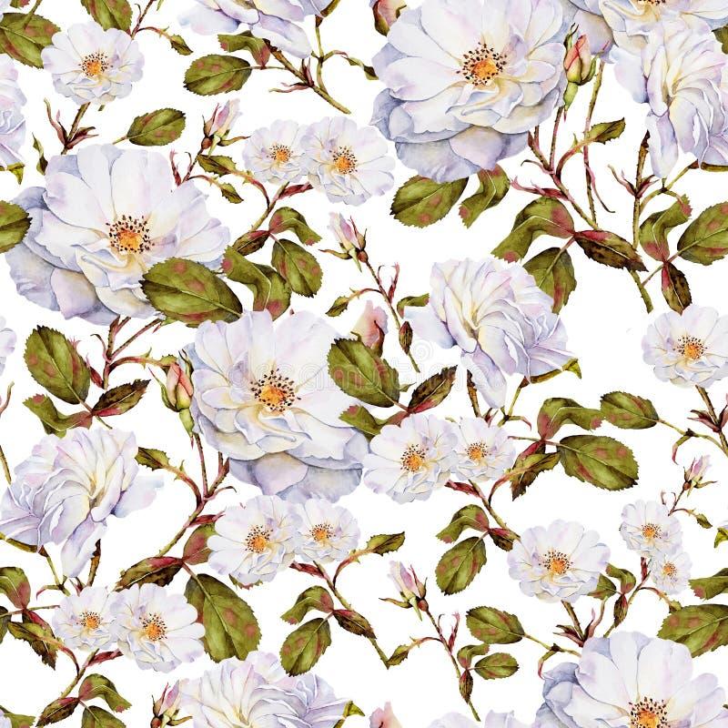 Białych róż krzaka akwareli bezszwowy wzór royalty ilustracja