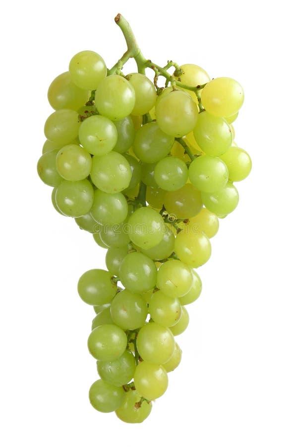 białych winogron obraz stock