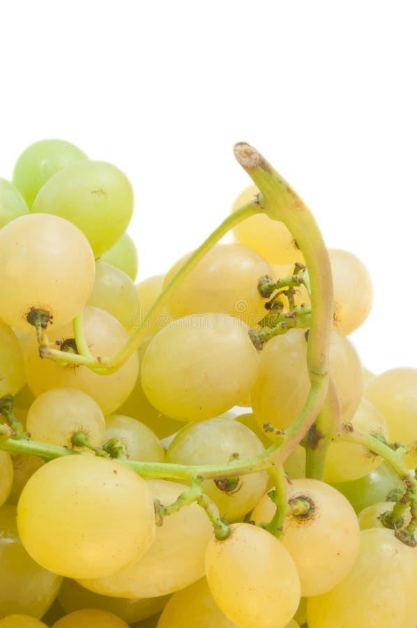 białych winogron obrazy royalty free
