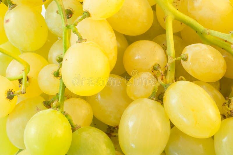 białych winogron fotografia stock