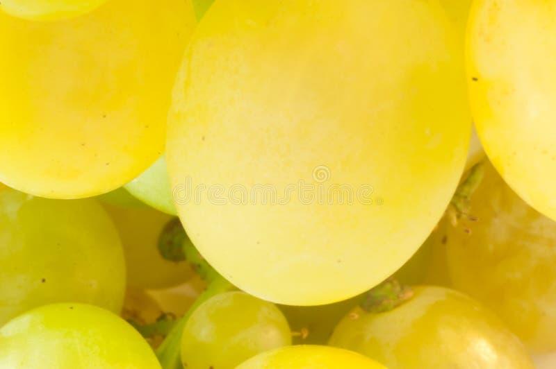 białych winogron zdjęcie stock