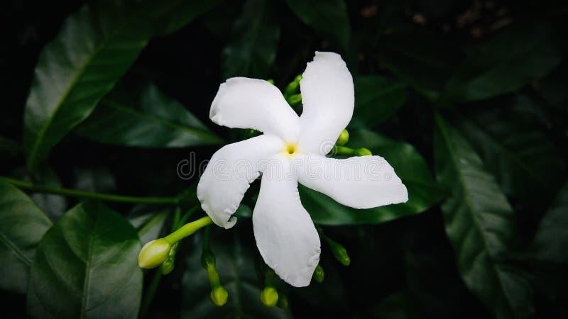 bia?e kwiaty zdjęcia stock