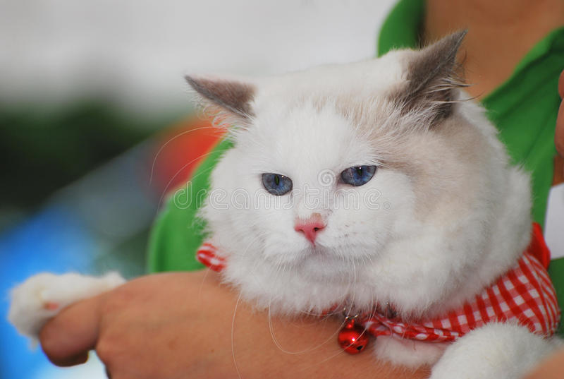 Download Biały Kot obraz stock. Obraz złożonej z koci, dżdżownicy - 27418669