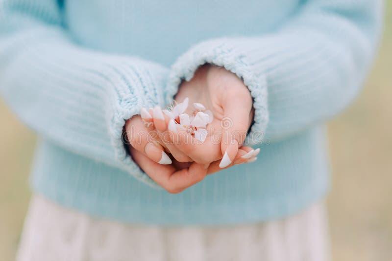 Bia?y kwiat w kobiet r?kach z francuskim manicure'em obraz royalty free